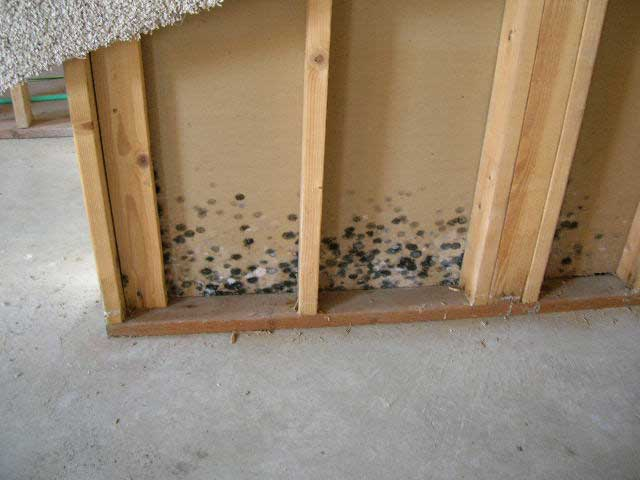 3 Brothers Waterproofing Mold Remediation Pa Nj And Delaware